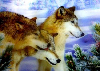 3 Winter Wolfs 3D Picture, A 3D Lenticular Wolves Wall Art Ready To Frame, 34.5 x 24.5 cm (Wolf Print): Amazon.co.uk: Kitchen & Home