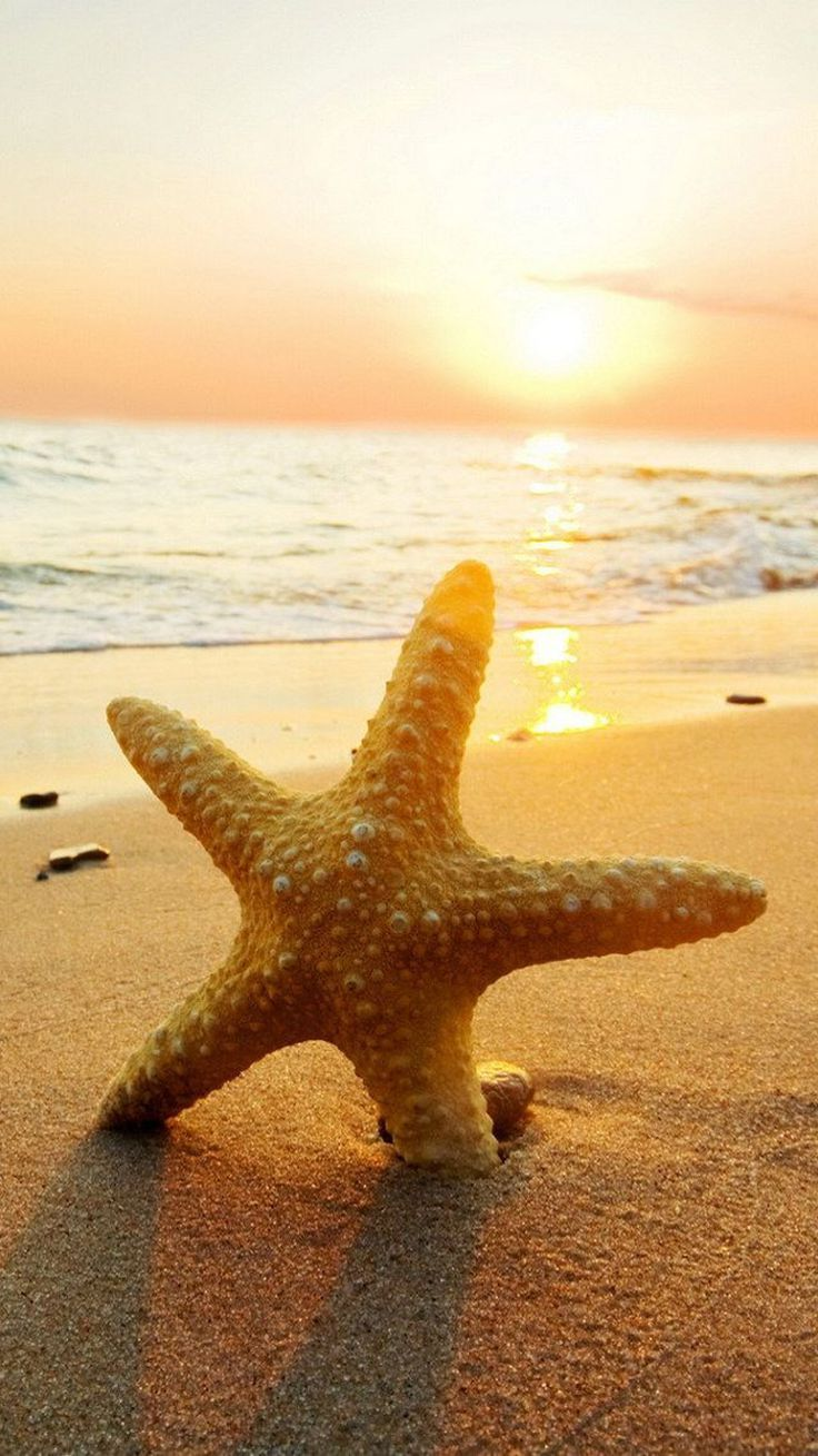 Beach Starfish Wallpaper For Mobile