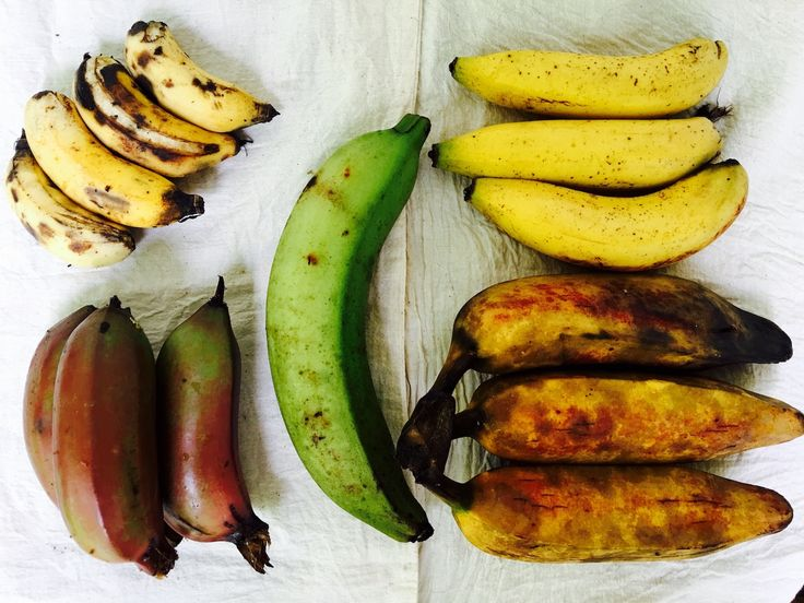 Not all bananas are created equal! We've just picked these in the fruit garden within our private rainforest reserve - Cuadratas (because of their square cross section), Plantain (delicious fried), Red Bananas (short and plump and our family favourites), small Yellow Bananas (they ripen quickly and are super sweet and make delicious banana breads) and a more common Banana (Golfo Dulce, Costa Rica). Be part of the dream at Golfo Dulce Retreat www.gdretreat.com