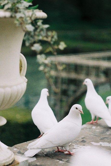Mens Cotton Pocket Square - from pigeon to dove by VIDA VIDA UtehK9na
