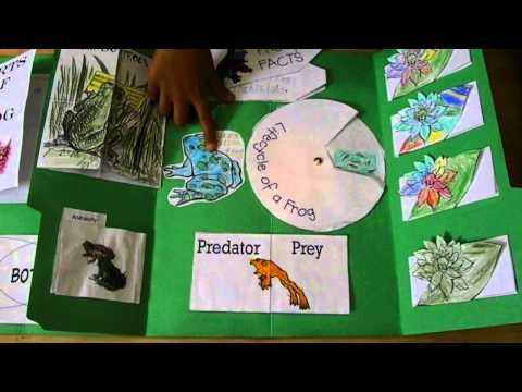 Frog Lapbook and Unit Study - YouTube