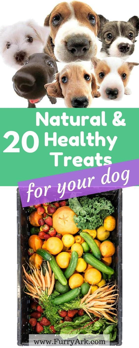 20 All natural dog treats for your doggy. can dogs eat watermelon, bananas, etc?. Learn What human food dogs can eat and how To Keep Your Dog Happy And Healthy | dog health & care tips