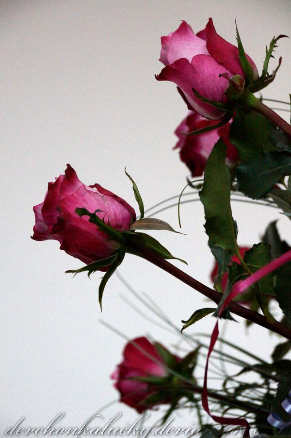 Roses of the page by DevchonkaLucky.deviantart.com on @DeviantArt