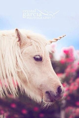 Transform yourself or your horse into a unicorn. Unicorn Horn for Horses you choose size and color. by TipTopTutu, $20.00