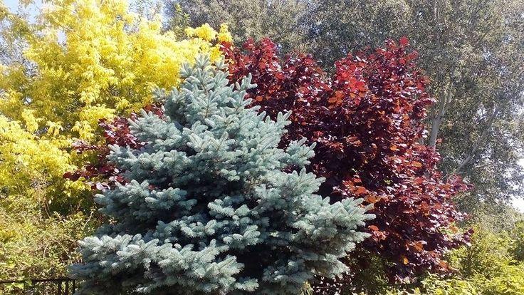 A Nap még a felébredéssel próbálkozik, de a fák közötti mocorgás-madárcsiripelés visszavonhatatlanul jelzi a reggelt. Ilyenkor nap mint nap elcsodálkozom, hogy milyen szép a nyári reggel... - Németh György írásai - https://www.facebook.com/egymondat