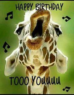 Happy Birthday to YoOoOoOo! (giraffe meme) | Happy Birthday ...