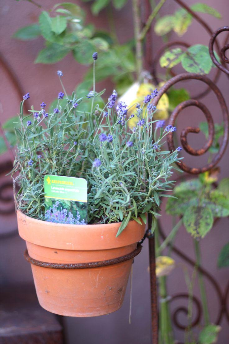 17 best images about rostige gartenhelfer - Dekoration lavendel ...