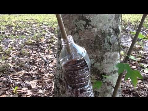 ▶ Air Layering - Using Water Bottles (Subtropical Gardening) - YouTube