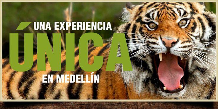 Parque Zoológico Santa Fe - Medellín - Colombia - Zoo. - Parque Zoológico Santa Fe