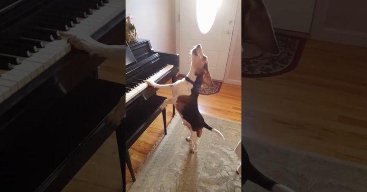 ¡Aviso! Si te gusta la música observa el singular concierto que ofrece Buddy
