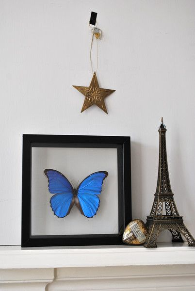 who doesn't like a framed butterfly? Ethically sourced beautiful colours,impactful stylish pressie - I would love one of these, so beautiful