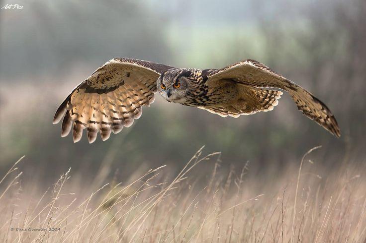 ...a volar..