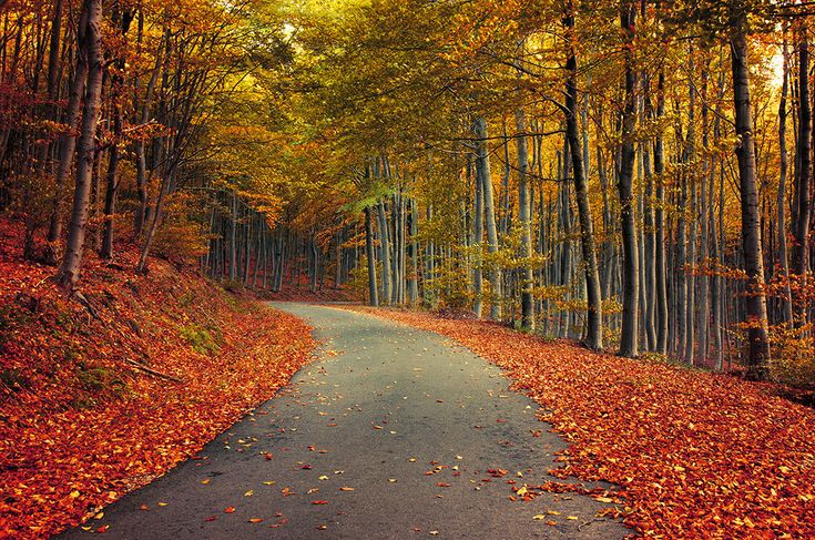 "Autumn forest road poster - nature photography - fall foliage - tree wall art - ""Autumn Journey XIX."" by Zsolt Zsigmond - SKU0085"