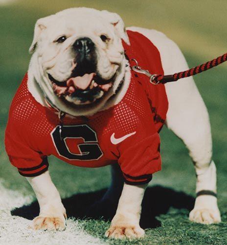 Georgia bulldogs. Uga