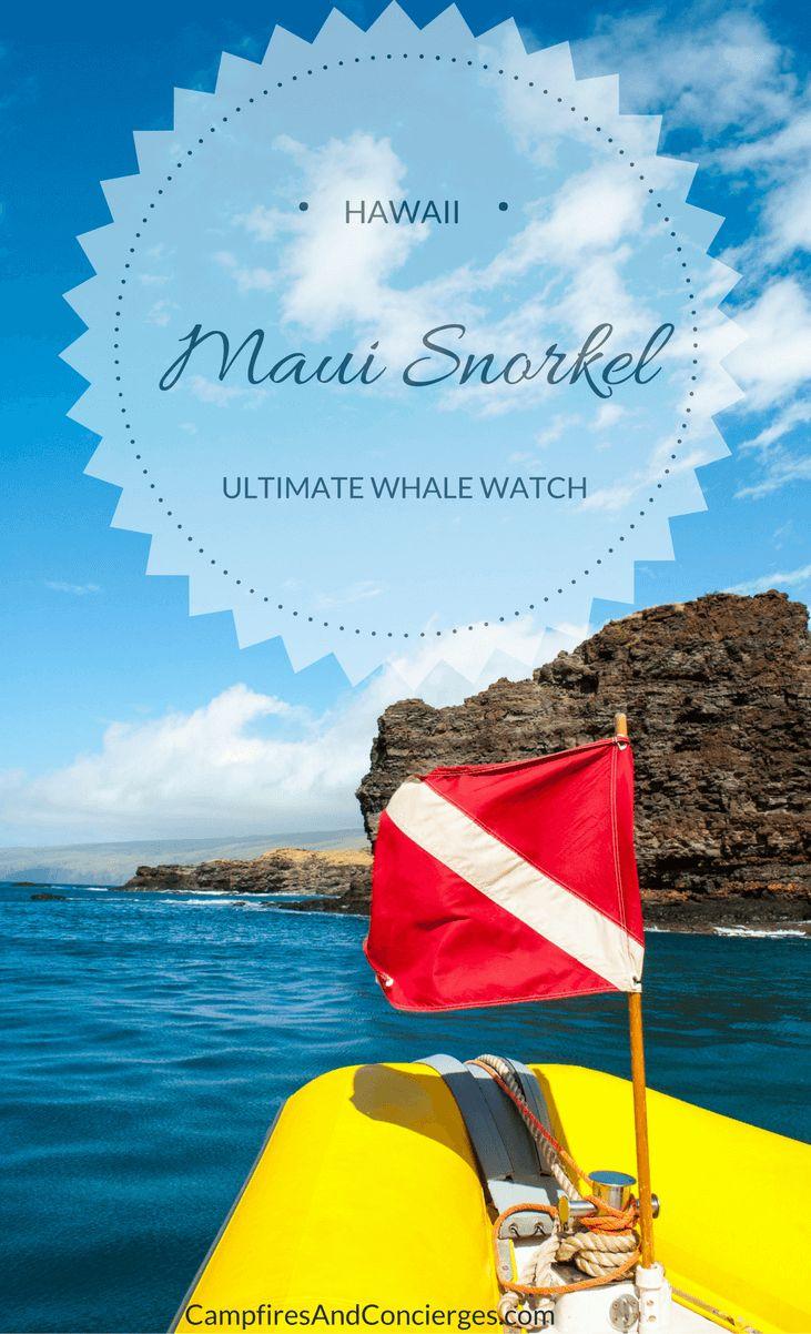 Best Maui Snorkeling Tours #maui #lahaina Ultimate Whale Watch