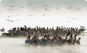 Kenya: Exodus Photo, Photo Competition