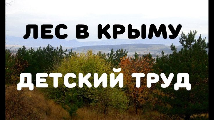Крымский лес, тц и рынок. Детский рабский труд. Vlog#3