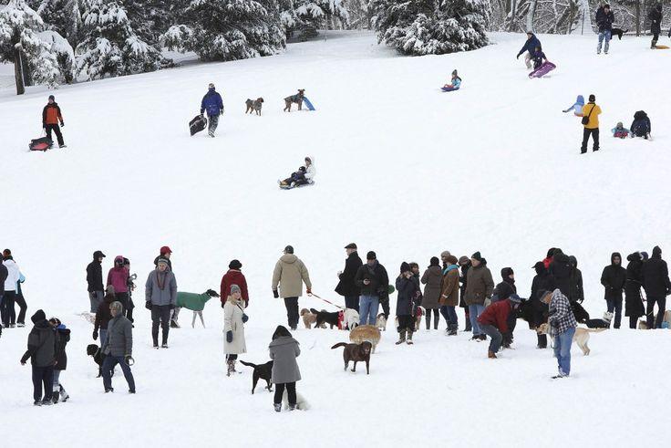 Nella Grande Mela imbiancata dalle forti nevicate portate dalla tempesta Nemo, in molti si sono precipitati a Central Park per approfittare del magico scenario innevato nel cuore di Manhattan. Alcuni con gli sci, altri con gli slittini o in compagnia dei cani