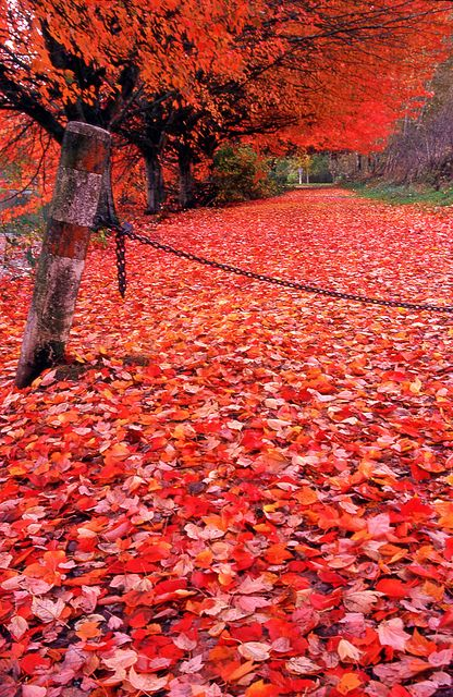 Day 307/365 - Fall upon us by Great Beyond, via Flickr