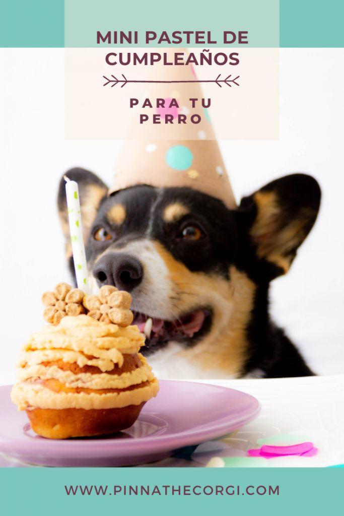 Corgi Dog, Pet Treats, Pets, Breakfast, Blog, Animals, Cake Birthday, Homemade Recipe, Deserts