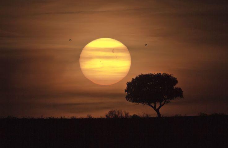 distant sun: Sunspots, Lion King