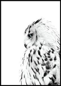 Plakat med foto av hvit ugle