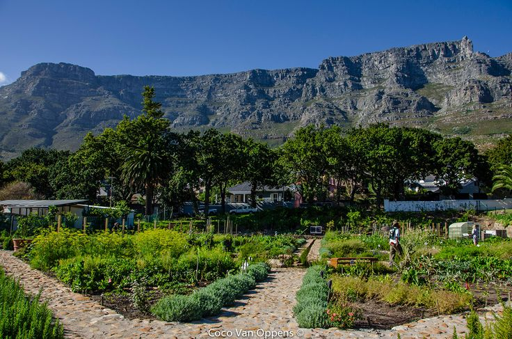 View from Oranjezicht City Farm Market (image by Coco Van Oppens)