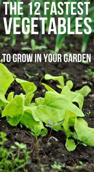 12 Fastest Vegetables to Grow in your Garden