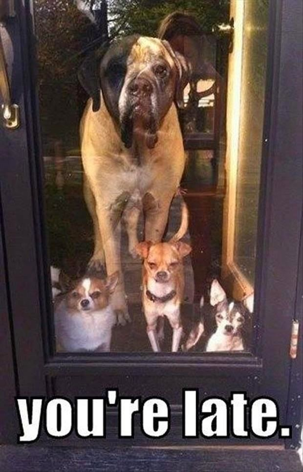 "The dogs are all mad because, ""You're Late"""