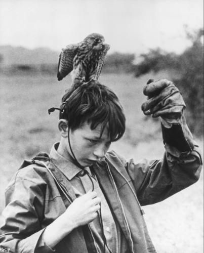 Kes, 1969   Film   Yorkshire   Anorak boy kestrel   Bird   Hawk