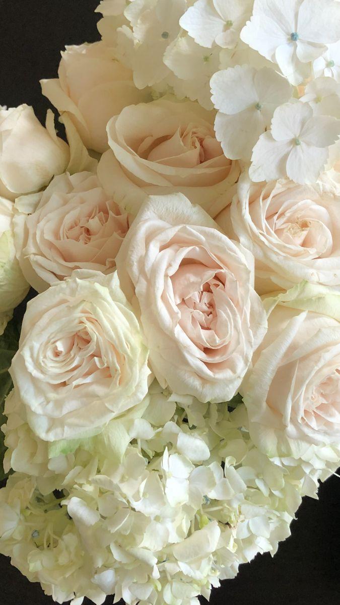 White Hydrangea In 2020 Bulk Flowers Online Wholesale Flowers Flowers For Sale