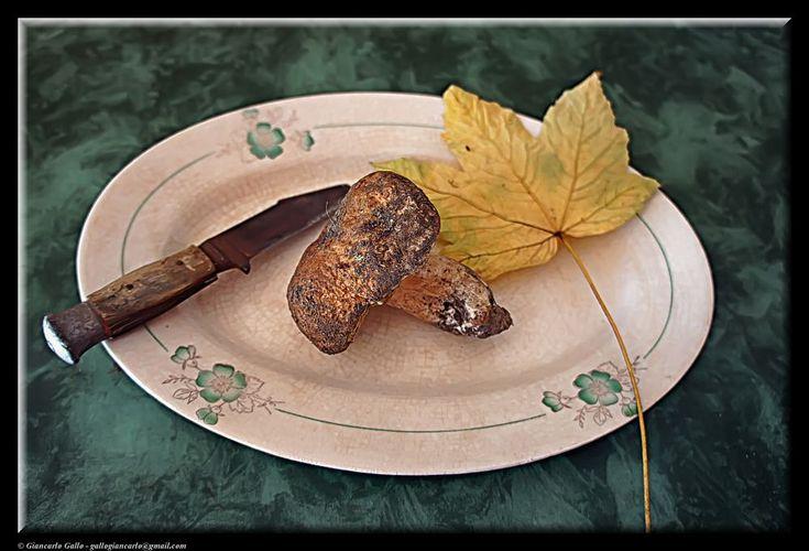 Porcini mushroom by Giancarlo Gallo