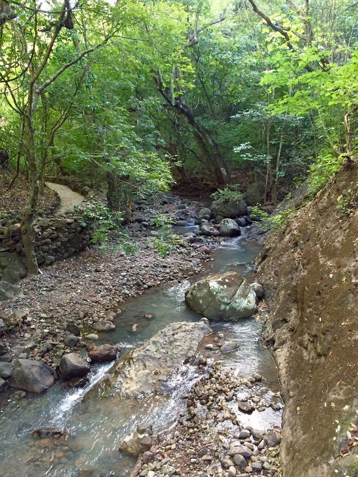 Bosque de Cinquera #ElSalvador | SUCHITOTO.TOURS@gmail.com