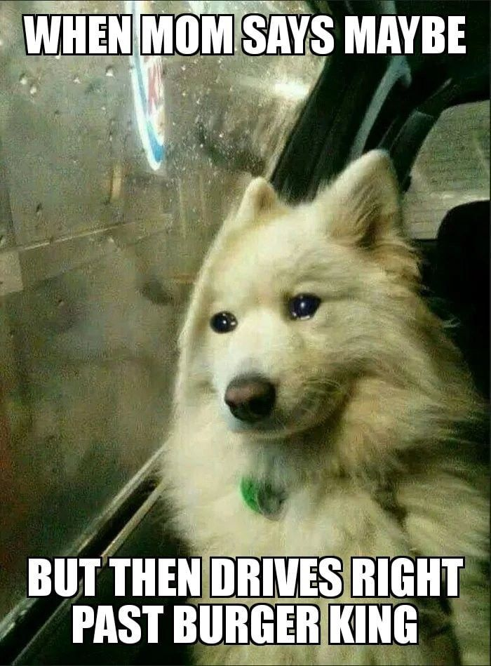 The Meme We Deserve Right Now Funny Animal Memes Animal Memes Best Funny Pictures