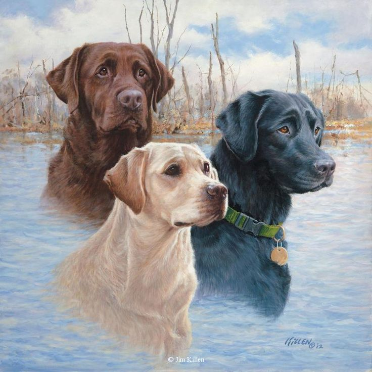 Legends Labrador Retrievers<br>Canvas Giclee 24 x 24