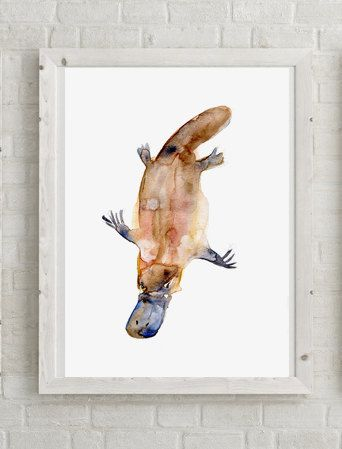 Platypus Art Platypus watercolor painting Giclee by Zendrawing