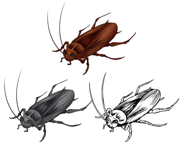 القضاء على الصراصير الصغيرة اكتشف افضل طرق التخلص من حشرات المنزل الأرضية لمنع انتشارها In 2021 Cockroaches Animals Insects