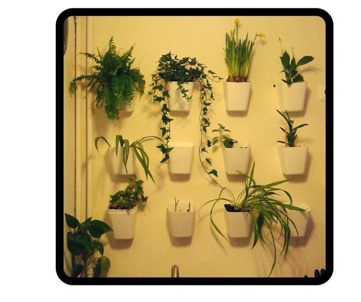 Pod wpływem impulsu powstała zielona ściana - tym razem z mało jadalnymi kwiatami (vertical garden)