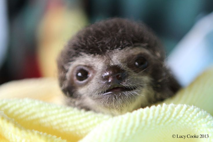 The British filmmaker, photographer, zoologist founded the Sloth Appreciation Society. | The 29 Cutest Sloths That Ever Slothed :: I am making noises that can only be heard by dogs right now. ::