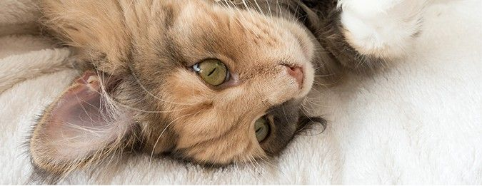 Enhance your Senior Cat's Quality of Life.  https://www.epetstore.co.za/enhance-your-senior-cat's-quality-of-life