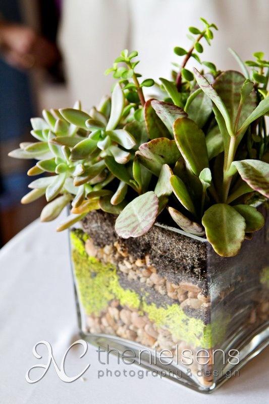 Best 20 Succulents In Glass Ideas On Pinterest