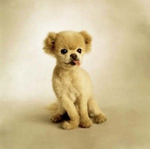 Why Do Small Dogs Help with Hypoallergenic Conditions: Animal Stars, Cute Puppies, Cutest Dogs, Small Dogs, Teddy Bears, Glorious Stories, Pomeranians, Cute Dogs, Animal Memes