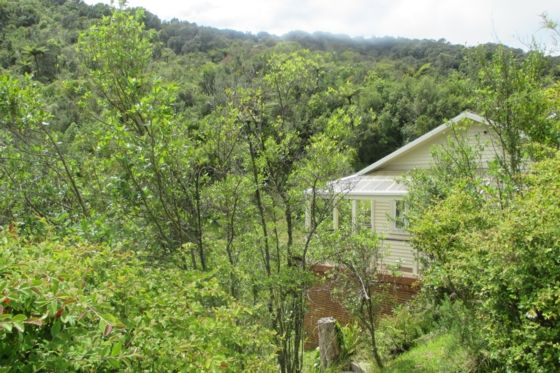 Bush bach nestled in rese-Greymouth-Bach or holiday home