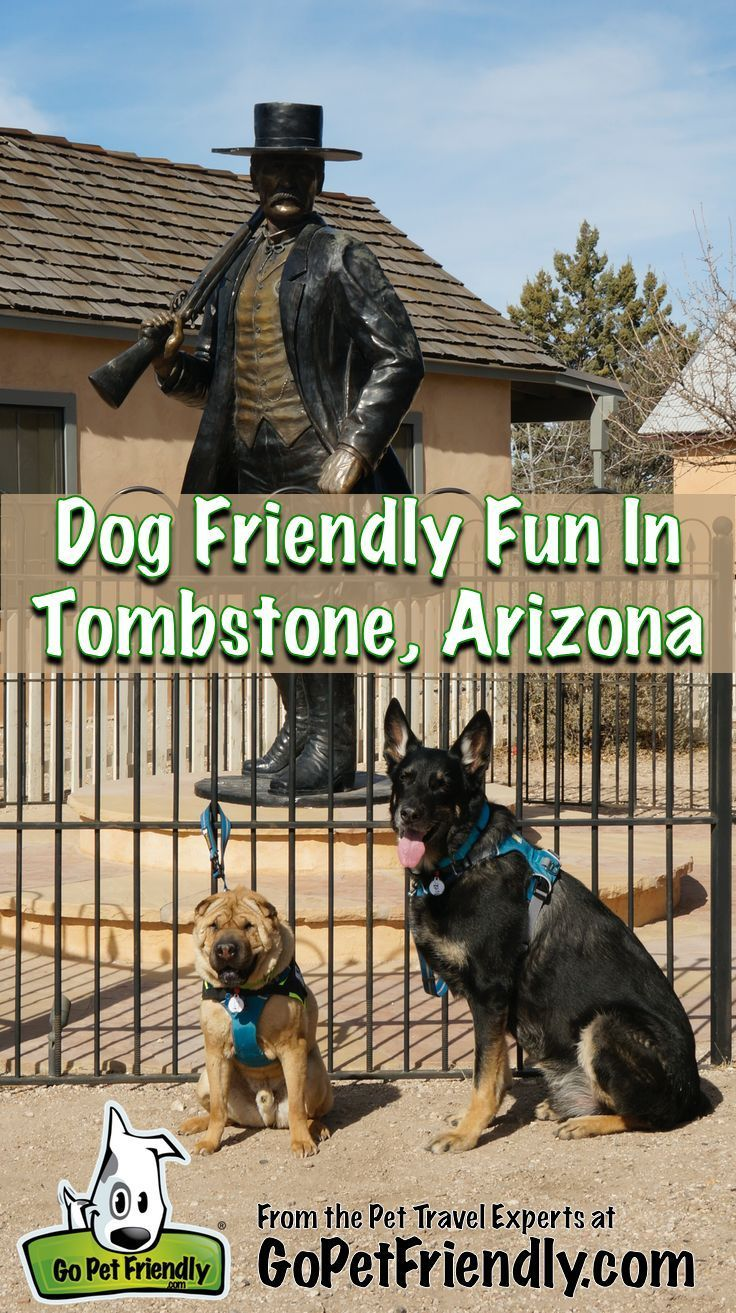 Pet Friendly Fun In Tombstone Arizona Dog Friends Road Trip With Dog Pet Travel
