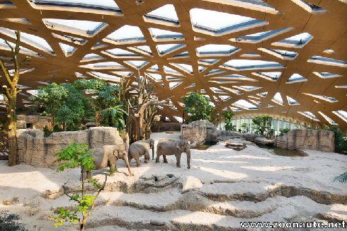 Le 7 juin 2014, ouverture du nouveau parc des éléphants au Zoo de Zurich (Episode 1)