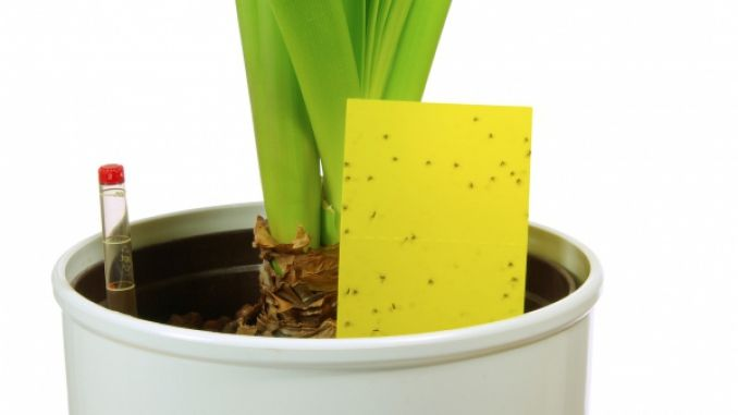 Gelbtafel gegen Mücken
