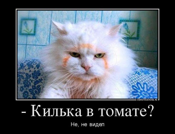 - Килька в томате?