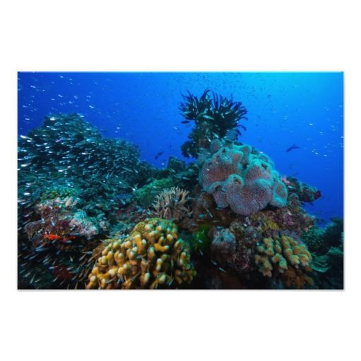 Many thanks to Noah from Croton-on-hudson, NY for purchasing this Coral Sea photo print.