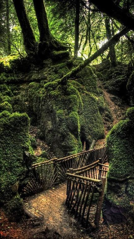 Royal Forest of Dean. The forest was used exclusively as a royal hunting ground by the Tudor kings and one of the surviving ancient woodlands in England. Glouchester. ❀༺
