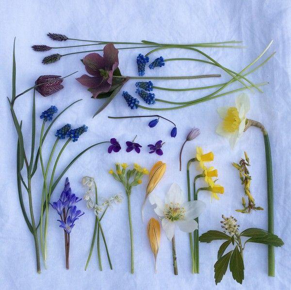 blomsterochbakverk.se - Fotoutmaning april 2015 - Dag 19-27